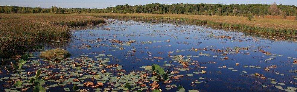 Wading Birds and Wetlands at the Fogg Dam Conservation Reserve