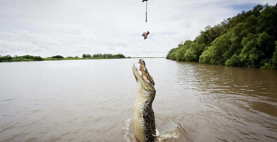 Jumping Crocodile Cruise Tour I