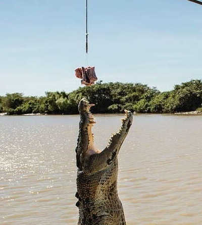Jumping Crocodile Cruise from Darwin $115