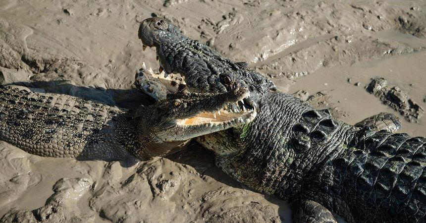 Morning Jumping Crocodile Cruise from Darwin - Crocodiles Adelaide River