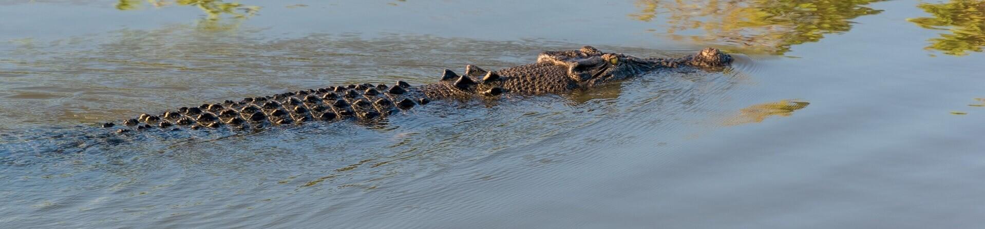 Morning Jumping Crocodile Cruise from Darwin 5